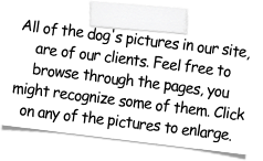 All of the dog's pictures in our site, are of our clients. Feel free to browse through the pages, you might recognize some of them. Click on any of the pictures to enlarge.