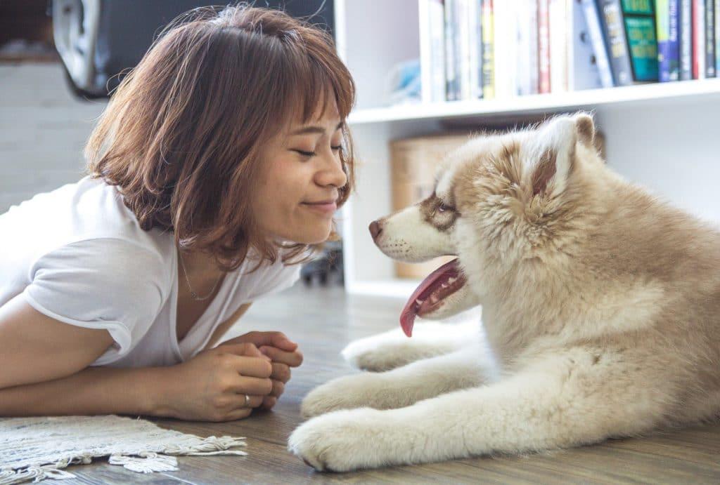Dog supervision