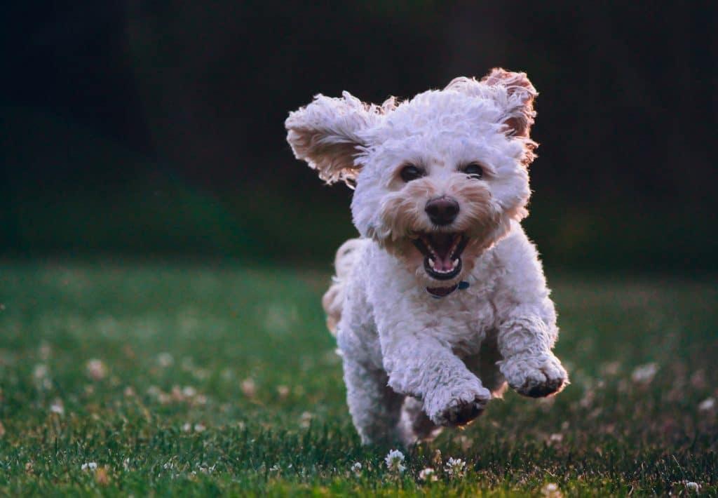 A dog run park